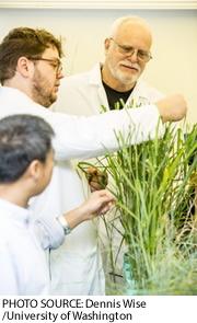 2016-12-01-engineersdeveloptransgenicgrass